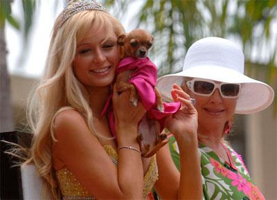 Пэрис Хилтон с собакой