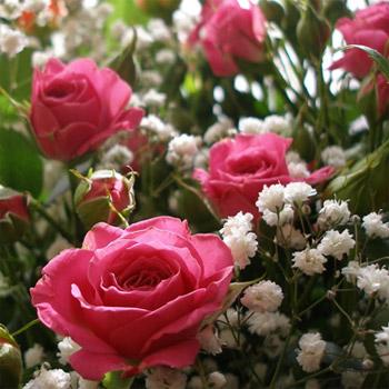 какие цветы дарят знакомым женщинам