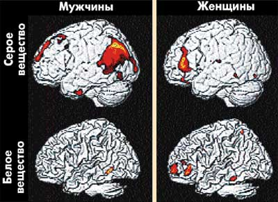 отличие женского мозга от мужского