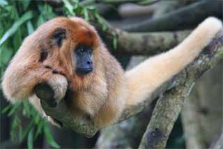 гороскоп майя - обезьяна