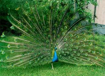 Красивейшие птицы нашей планеты (фото, видео)